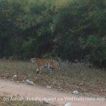 Difference between Tadoba Core and Tadoba Buffer Safari zones
