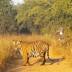How to plan a weekend trip to Tadoba?