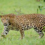 TOP 10 Amazing Wilderness Resorts of Kabini (Nagarhole), Bandipur