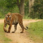 TOP 10 Wilderness Resorts of Kabini Nagarhole, Bandipur | Kabini Safari Online Booking