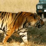 TOP 10 Wilderness Resorts of Kabini Nagarhole, Bandipur | Kabini Forest Safari Booking
