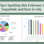 Let's go Tiger Spotting this February in Kabini Nagarhole and here is why