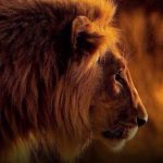 The Deaths of the Asiatic Lions, A Threat to the Ecological Systems