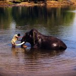 Mysore Coorg packages